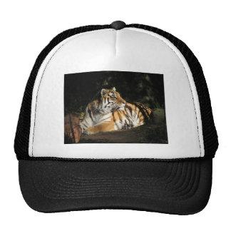 Tiger Baseball Cap Trucker Hat