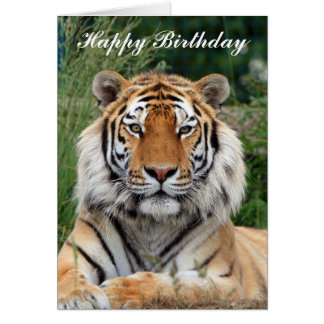 Tiger beautiful portrait happy birthday card