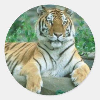Tiger Beauty Classic Round Sticker