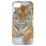 Tiger Beauty in Snow iPhone 5 Cover