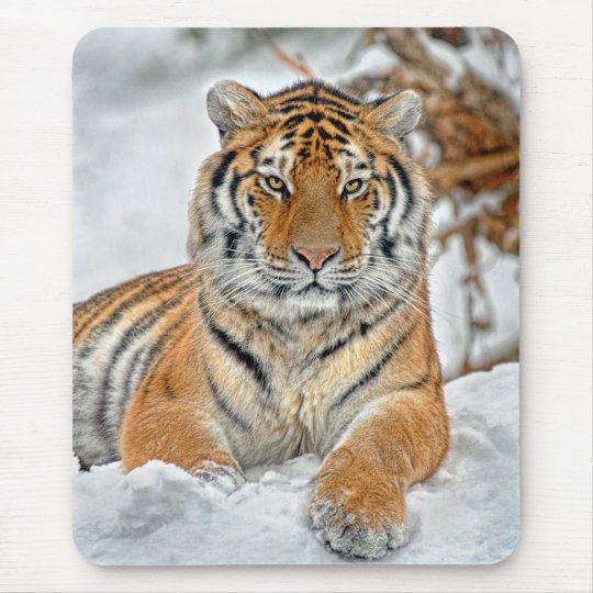 Tiger Beauty in Snow Mouse Pad