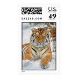 Tiger Beauty in Snow Postage