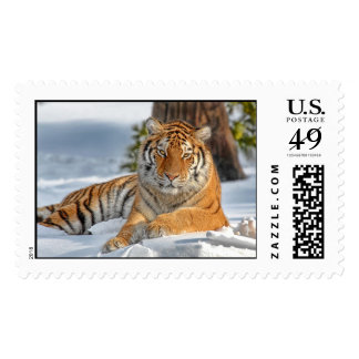 Tiger Beauty in Snow Postage Stamp