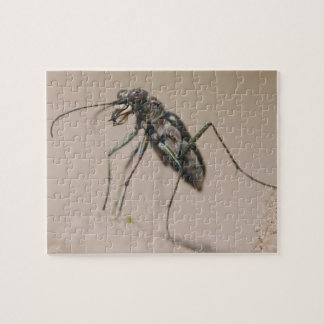 Tiger Beetle, Cicindela ocellata, adult on sand, Jigsaw Puzzle