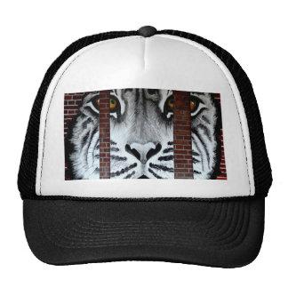 Tiger behind bars look forward to freedom hats