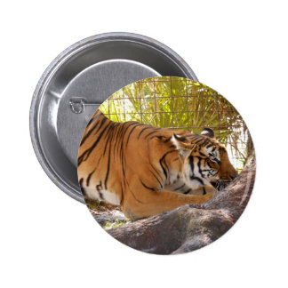 Tiger Bengali 001 Button
