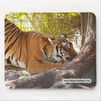 Tiger Bengali 001 copy Mouse Pad