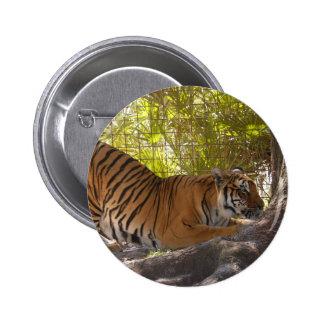 Tiger Bengali 002 Pins