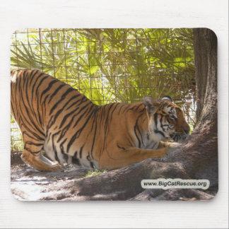 Tiger Bengali 002 copy Mouse Pad