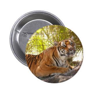 Tiger Bengali 003 Pin