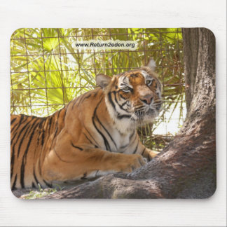 Tiger Bengali 003 copy Mouse Pad
