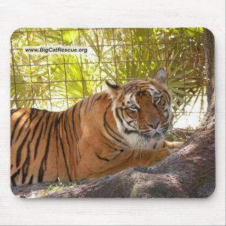 Tiger Bengali 004 copy Mouse Pad