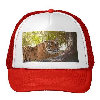 Tiger Bengali 004 Trucker Hat