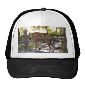 Tiger Bengali 005 Trucker Hat