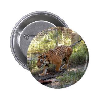 Tiger Bengali 006 Pin