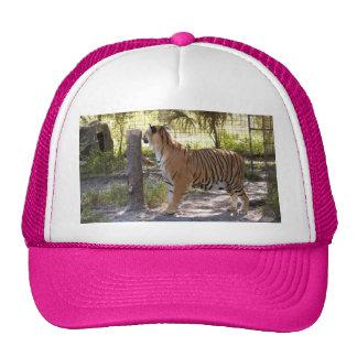 Tiger Bengali 007 Trucker Hat