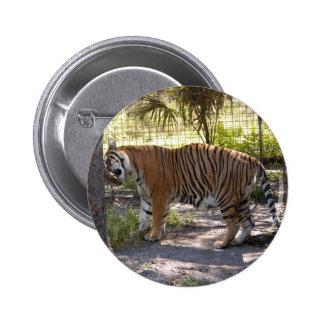 Tiger Bengali 008 Pins