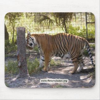 Tiger Bengali 008 copy Mouse Pad