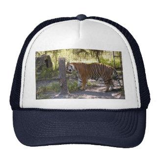 Tiger Bengali 008 Trucker Hat