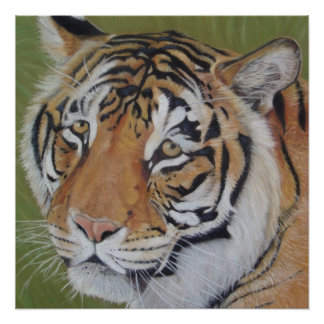tiger big cat original realist wildlife art poster