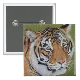 tiger big cat wildlife realist animal art button pinback button