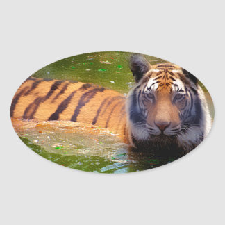 Tiger Bubble Bath Oval Sticker