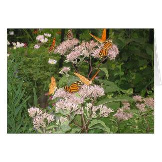 Tiger Butterflies Card