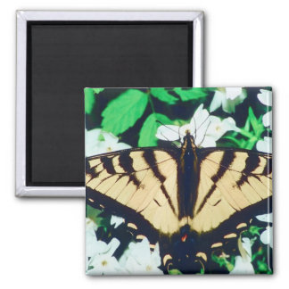 Tiger Butterfly 2 Inch Square Magnet