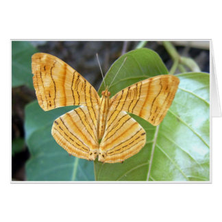 Tiger Butterfly Card