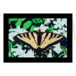 Tiger Butterfly Greeting Cards
