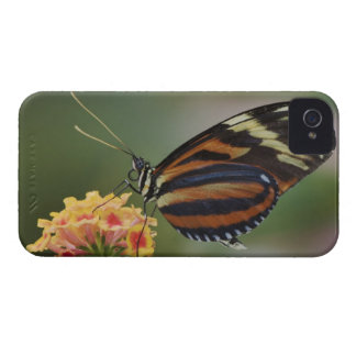 Tiger butterfly, Heliconius ismenius iPhone 4 Cover