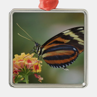 Tiger butterfly, Heliconius ismenius Ornament