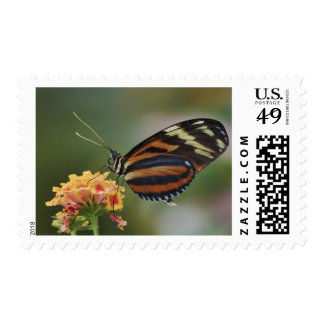 Tiger butterfly, Heliconius ismenius Postage Stamp