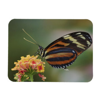 Tiger butterfly, Heliconius ismenius Rectangular Photo Magnet