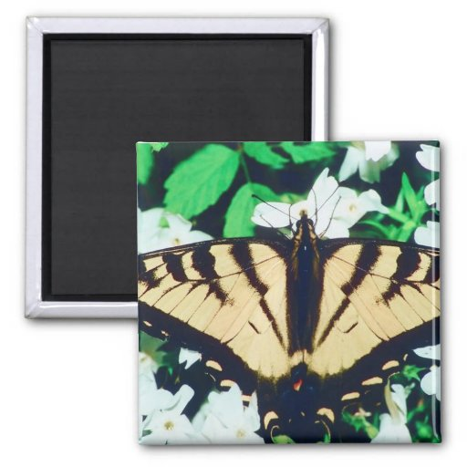 Tiger Butterfly Refrigerator Magnets