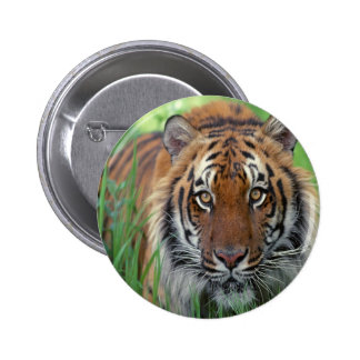 Tiger Pinback Buttons