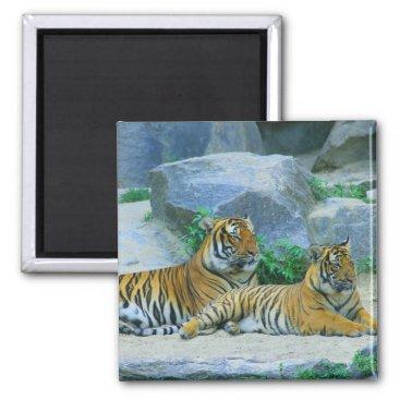 Bride Themed Tiger Cat Animal Stripes Pattern Destiny's Destiny Magnet