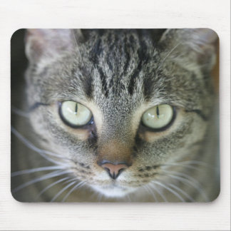 tiger cat face mouse pad
