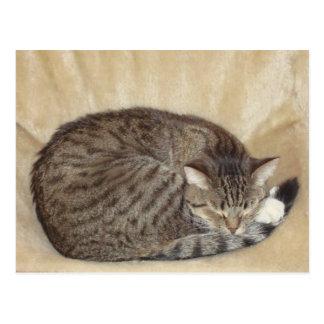 Tiger cat postcard