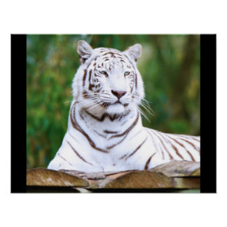 Tiger Cat Print Custom Personalize Anniversaries