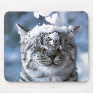 Tiger cat with snow dropping on his head mouse pad