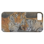 Tiger Cave iPhone 5 Covers