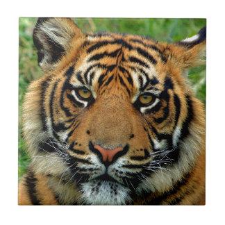 Tiger Ceramic Tile