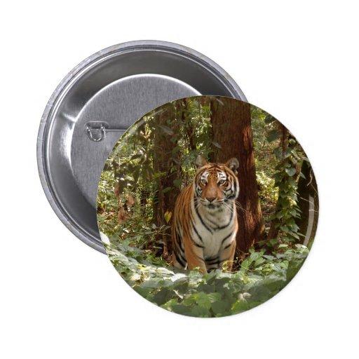 Tiger-China-Doll-b-14 Pins