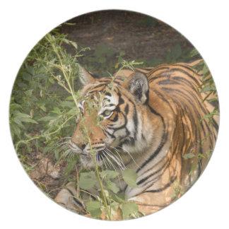Tiger-China-Doll-b-15 Plato De Cena