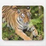 Tiger-China-Doll-b-22 Mousepad