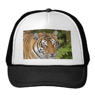 Tiger-China-Doll-b-25 Trucker Hat
