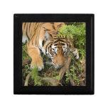 Tiger-China-Doll-b-26 Caja De Regalo
