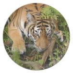Tiger-China-Doll-b-26 Platos De Comidas