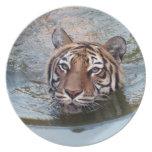 Tiger-China-Doll-b-3 Plato De Comida
